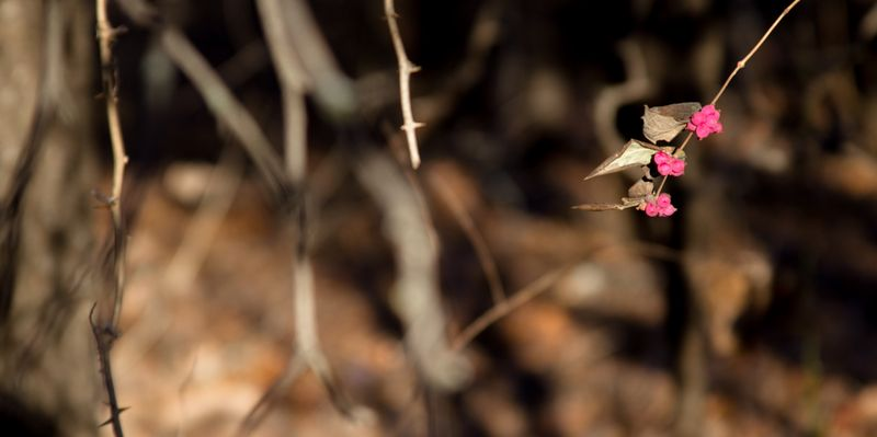 Pink in the woods-6433