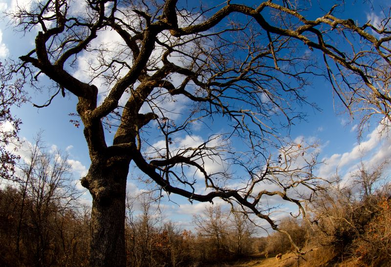 Tree in Fisheye-6695