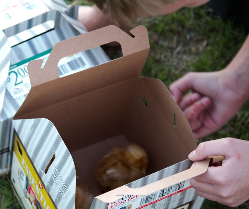 Chicks in a box-8709