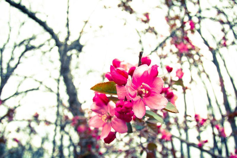 Flower near Spiro-9473-2