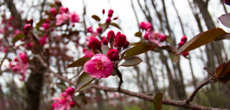 Flower near Spiro-9478