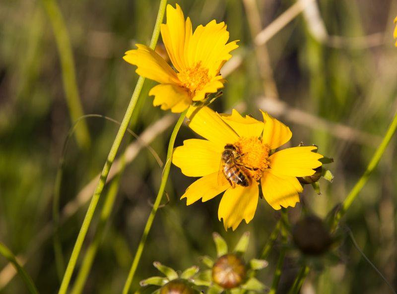Bee-1845
