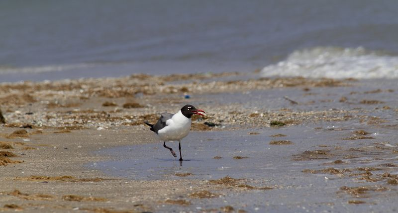 Galveston Wildlife-3185