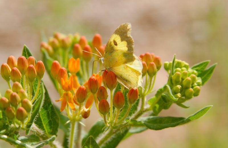 Butterflies in May-3640