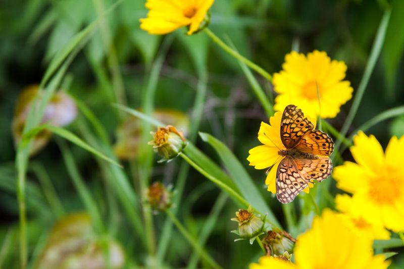 Wild flowers-3722