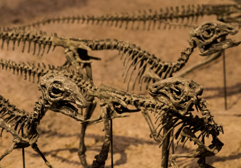 Denver Natural History museum-4978