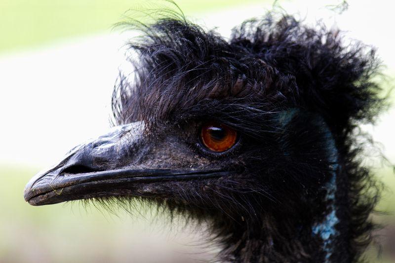 Emu -4744