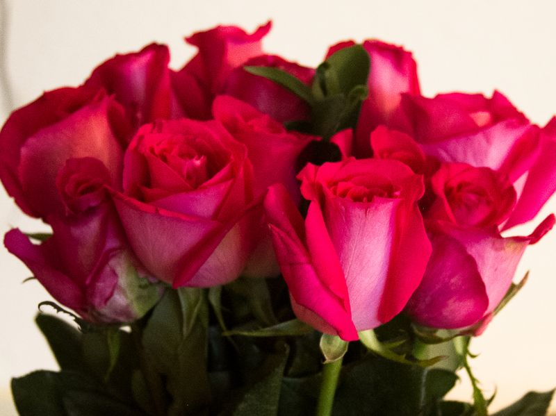 Birthday Roses-6484