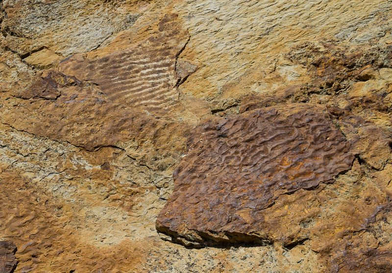 Fossilized Wave Patterns at Dinosaur Ridge by Joy Franklin-5221