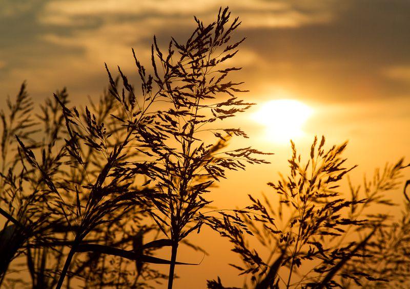 Oklahoma Sunset  by Joy Franklin Photography-8207