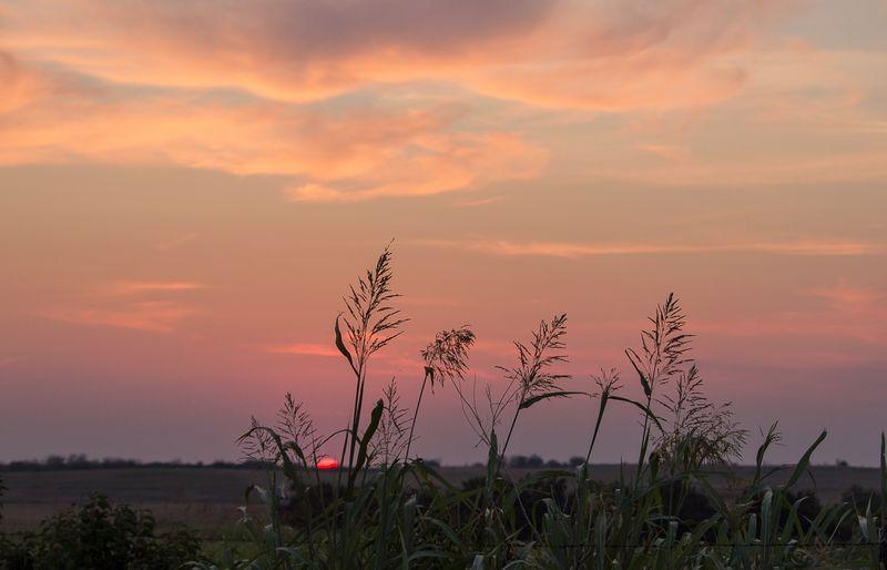 Sunset on Sharp Road-8329