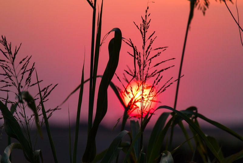 Oklahoma Sunset  by Joy Franklin Photography-8283