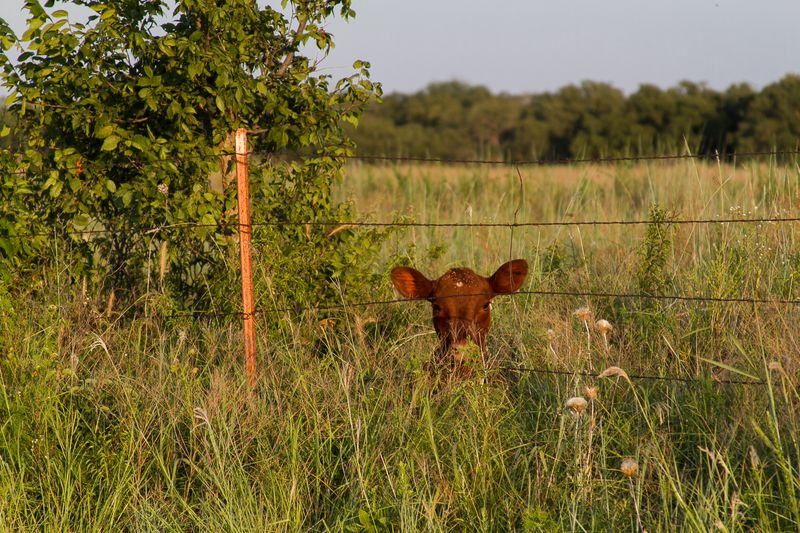 Peeking from the Pasture-8665