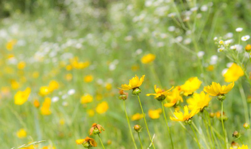 Wild flowers-3696