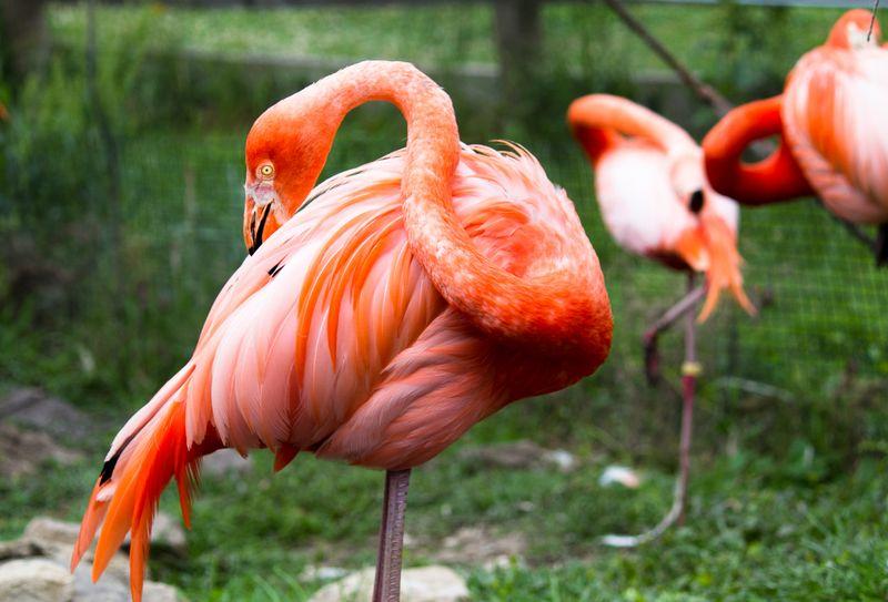 Pink Flamingoes-4615