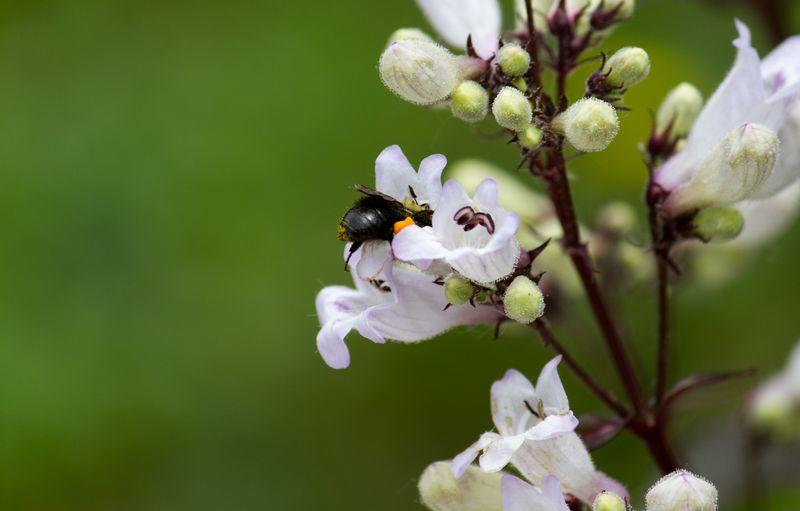 Pollinating-4741