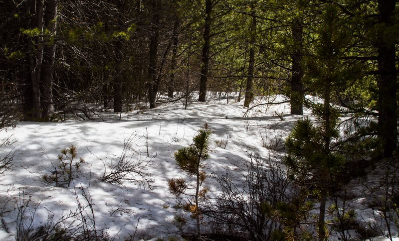 Snow in June-5574