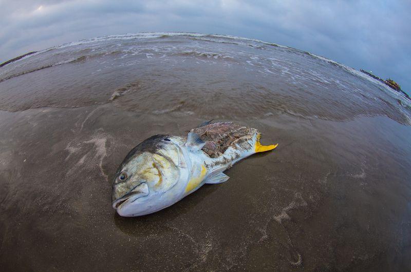 Fishy Fisheye-2978