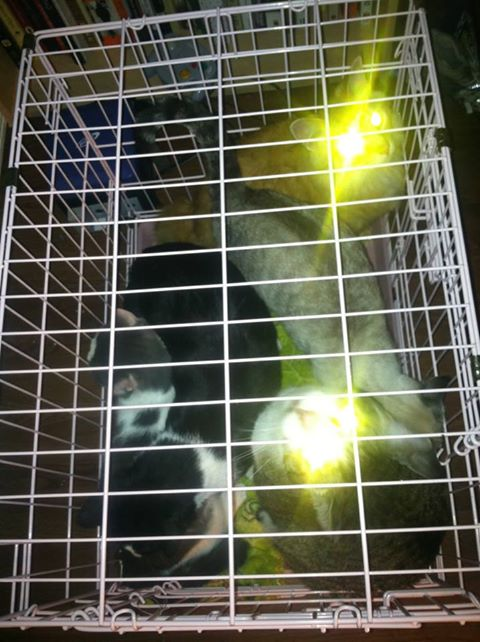 Five cats in a crate to go to the storm shelter