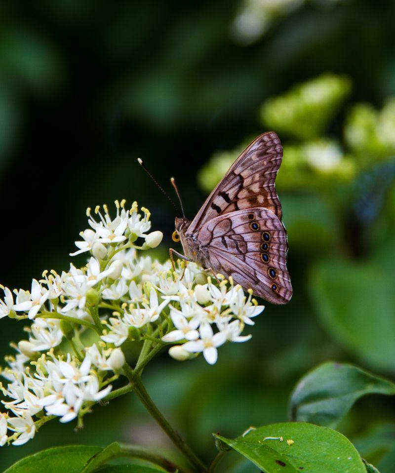 Butterfly -3667