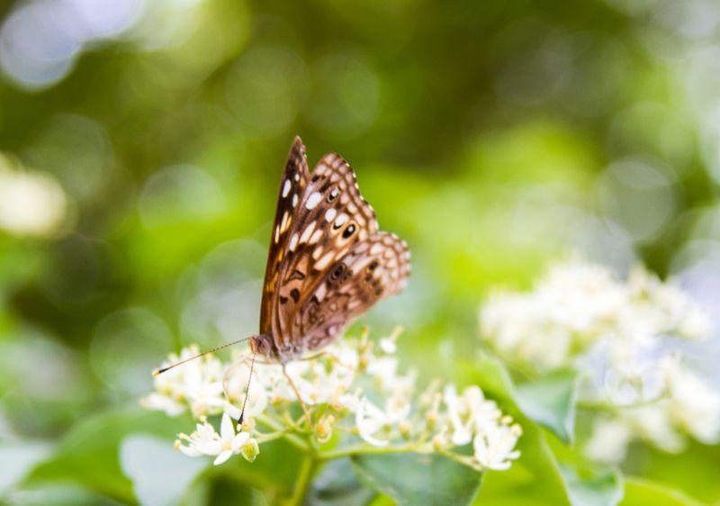 Butterfly -3673