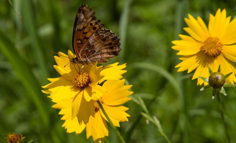 Butterfly-3650