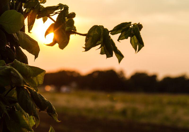 Oklahoma Sunset  by Joy Franklin Photography-8234