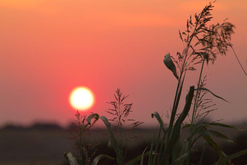 Oklahoma Sunset  by Joy Franklin Photography-8271