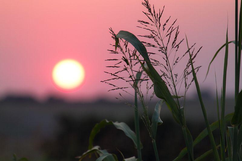 Oklahoma Sunset  by Joy Franklin Photography-8287