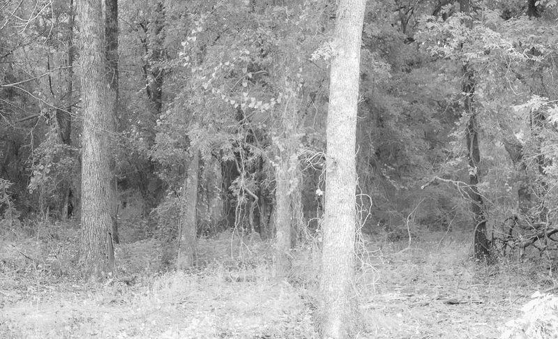 Creepy woods -8537