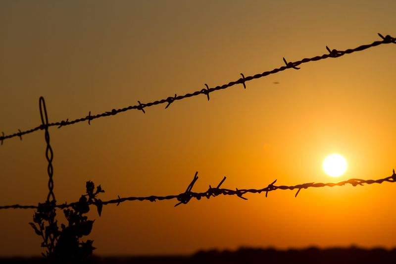 Repaired fence and sun-8696