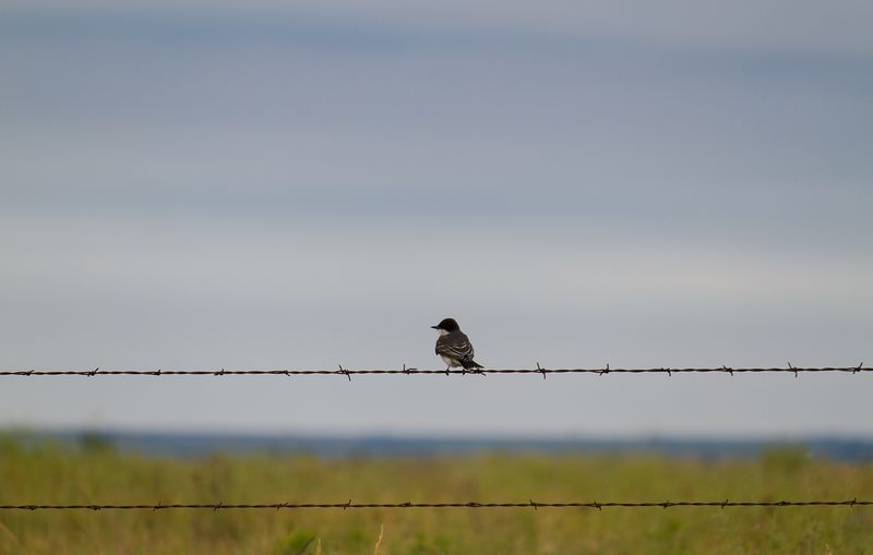 Bird on a Wire-9509