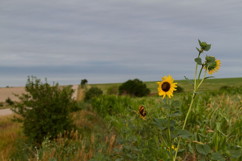 Nebraska Countryside -9523