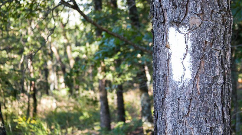 Old Military Trail near Talihina Oklahoma-1644
