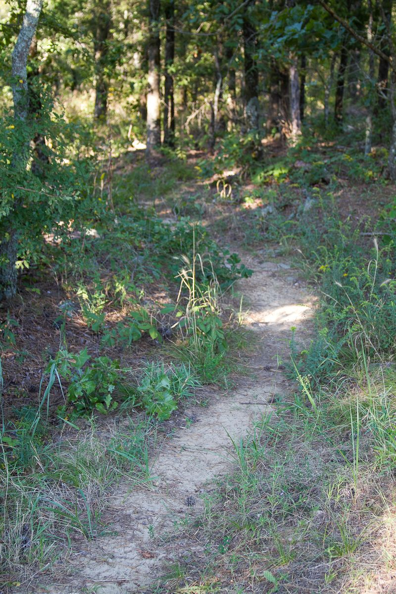 Old Military Trail -1638