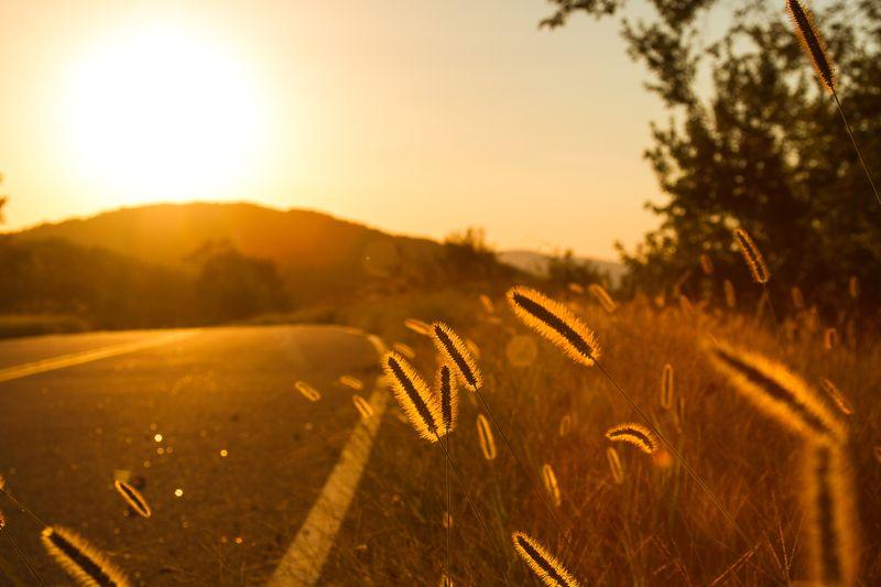 Golden along Talimena Scenic Drive-1760
