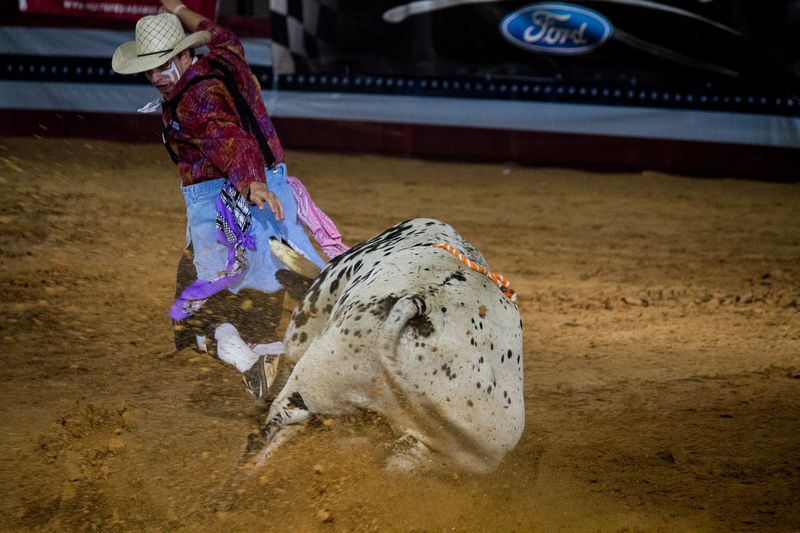Bullfighting in Ardmore-2946