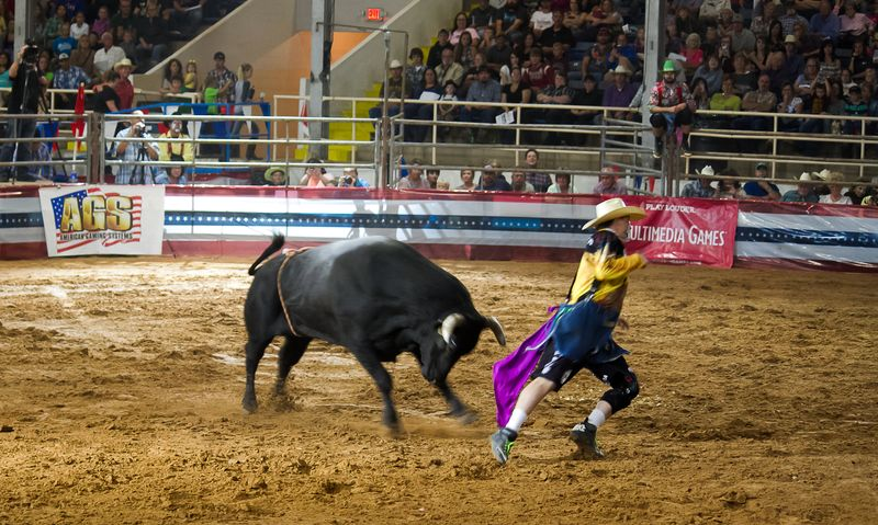 Bullfighting in Ardmore-3078