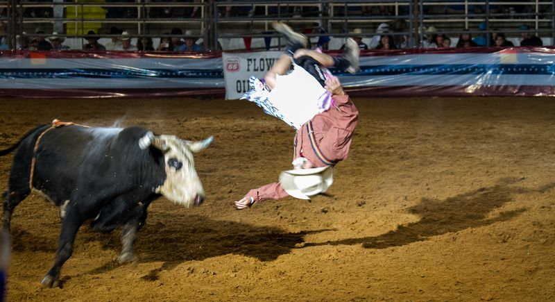 Bullfighting in Ardmore-3239