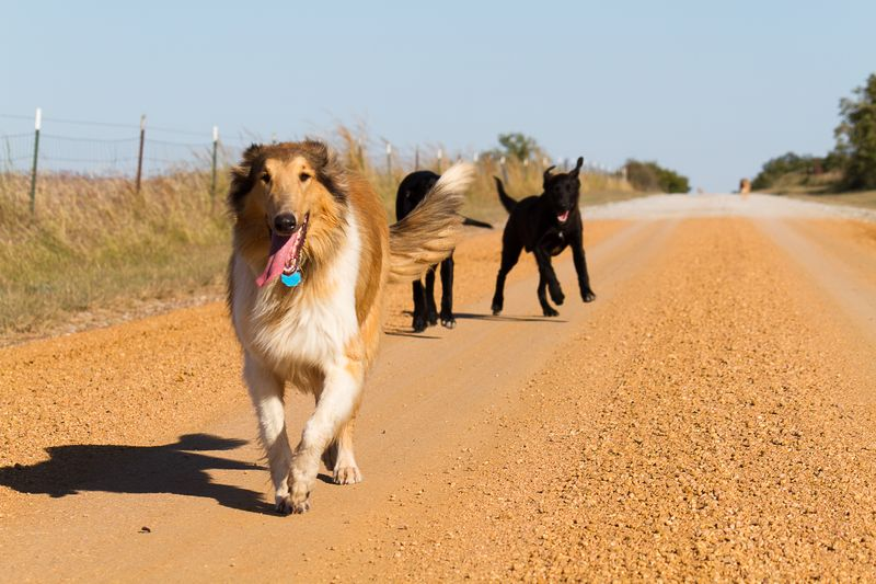 Dogs on a walk-4521