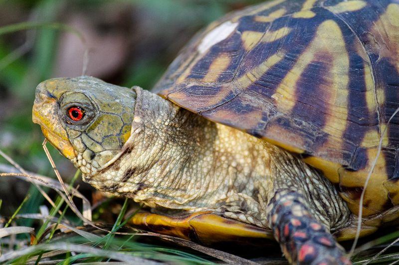 Turtle-4627