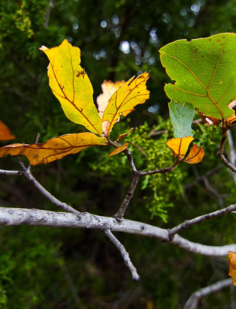 Fall foilage-5176