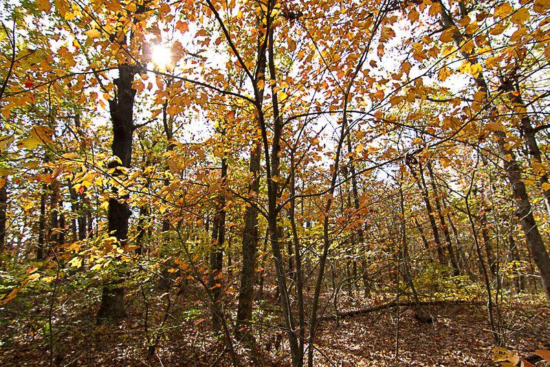 Ouachita Forest-5934