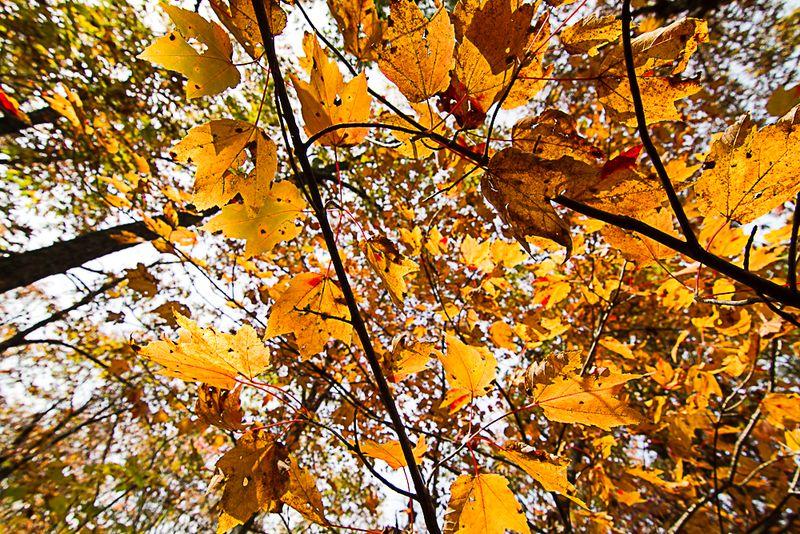 Talimena Scenic Drive in the Fall 2013-5919