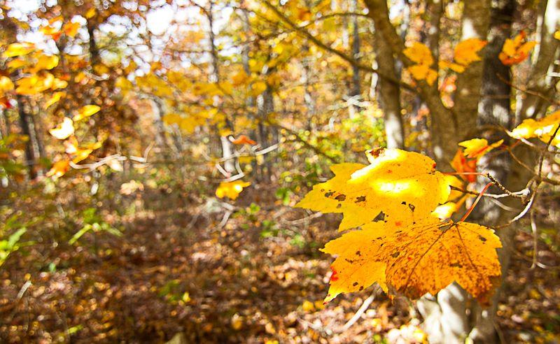 Leaves -5902