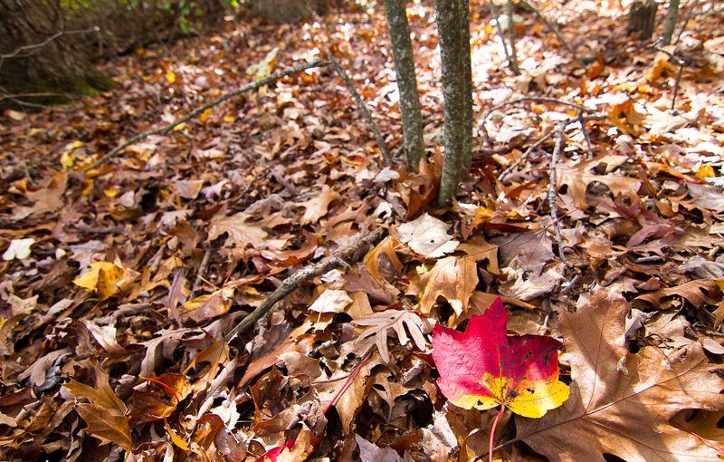 Blanketing the ground in death-5944