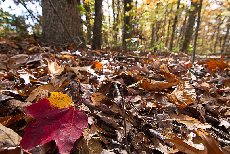 A Single Leaf-5939