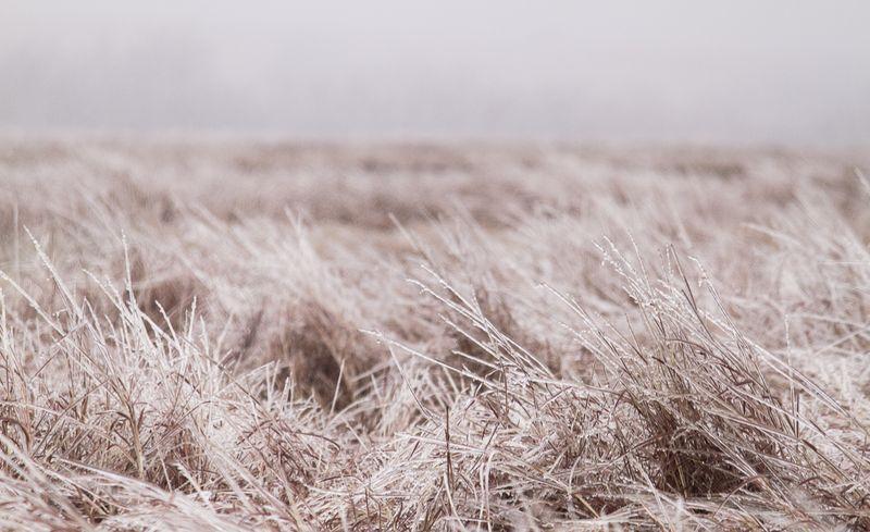 Frozen landscape-7424