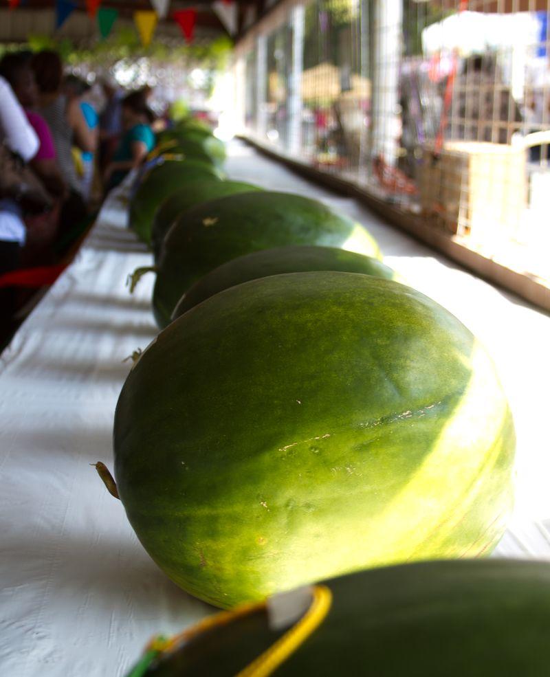 Black Diamond Watermelons Rush Springs Oklahoma-5469