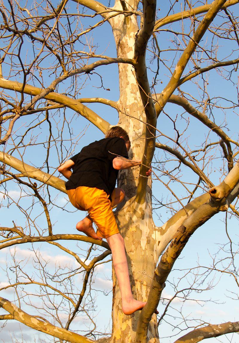 Boy in the tree-0224